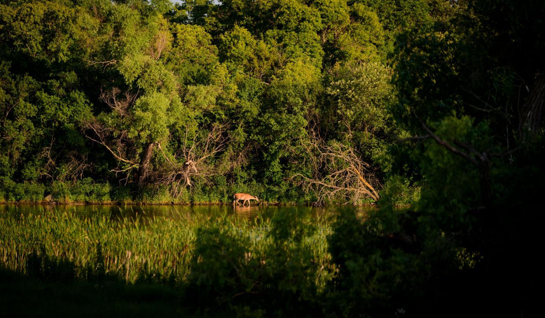 Oakwoods Lakes State Park, Bruce