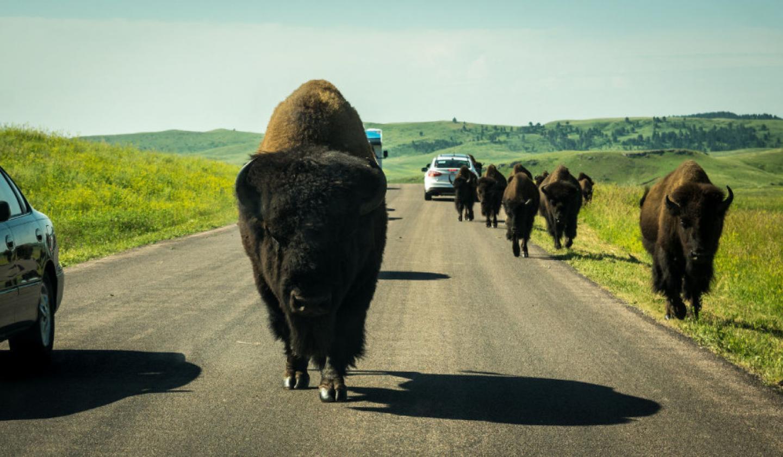 16 Things You Didnt Know About South Dakota South Dakota Travel