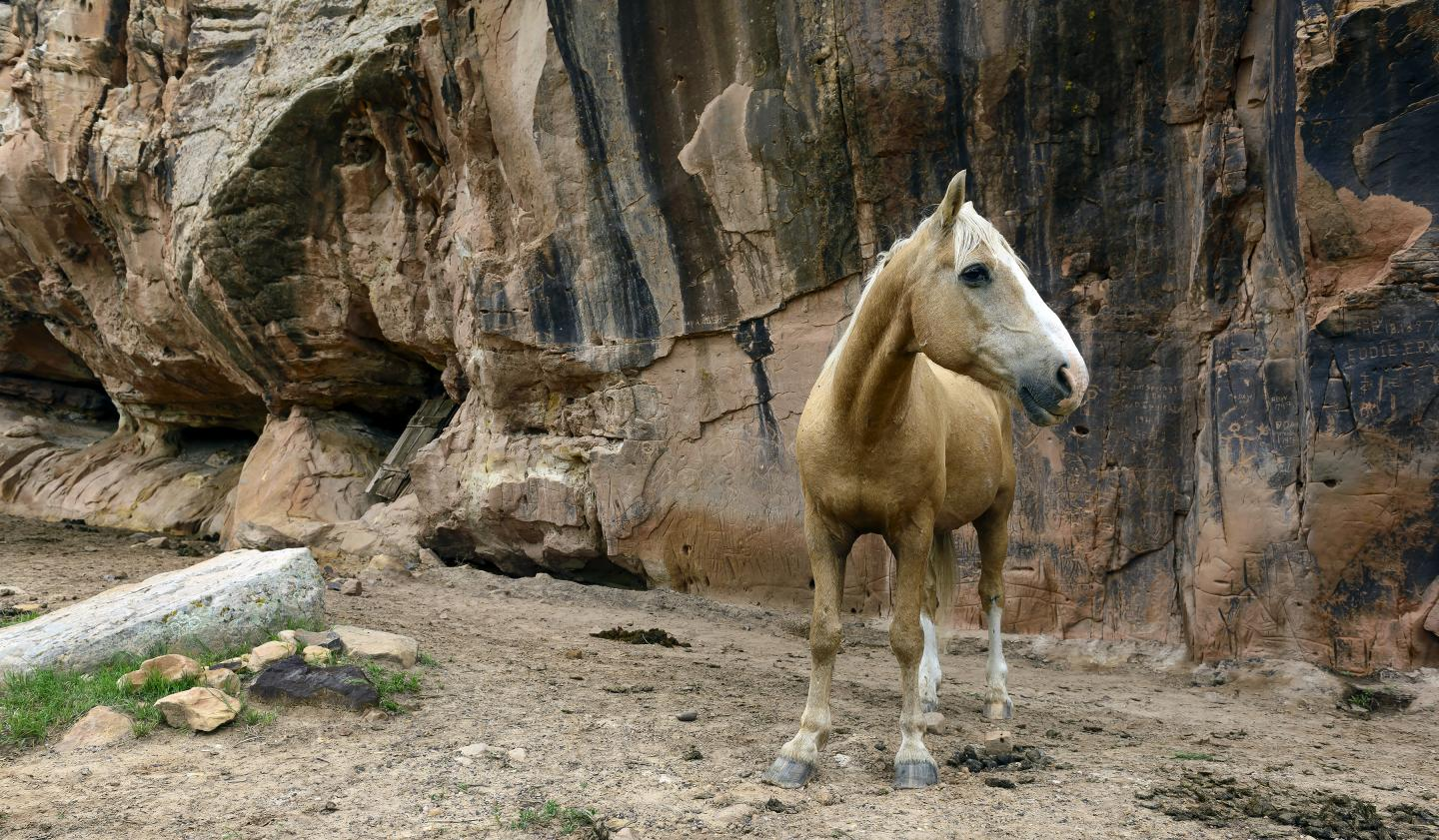 Wild Horses - South Dakota - Places to See: What to See