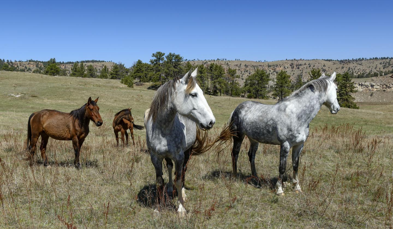 Black Hills Wild Horse Sanctuary, Hot Springs