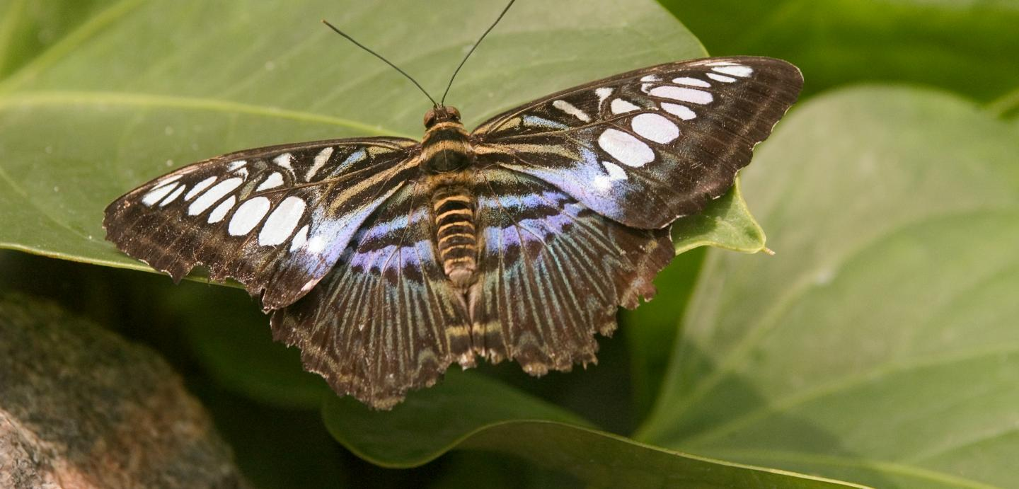 Butterfly House & Marine Cove, Sioux Falls