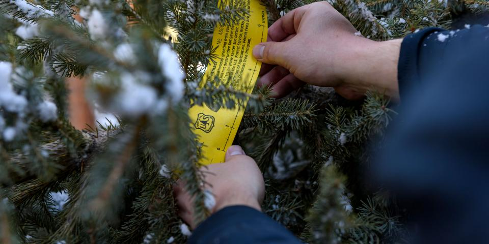 Black Hills National Forest Christmas Tree Permit