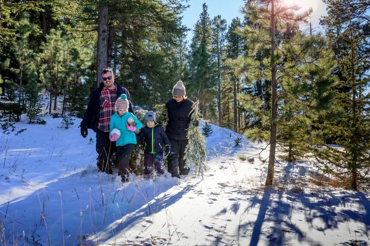Black Hills National Forest Christmas Tree Hunting