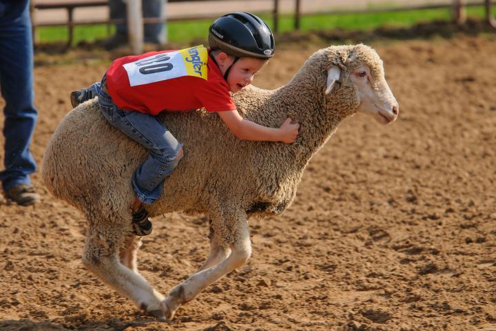 Central States Fair Mutton Busting Aberdeen