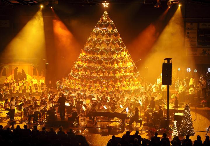 aberdeen living christmas tree - Living Christmas Tree