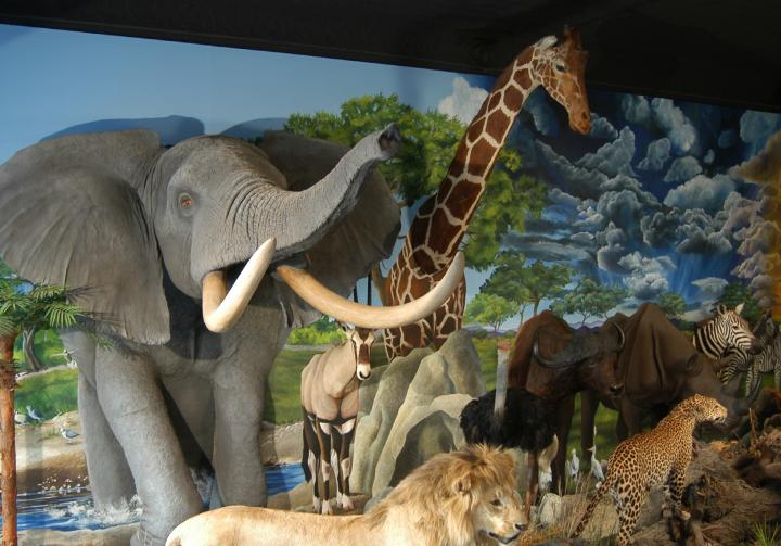 Hatterscheidt Wildlife Gallery